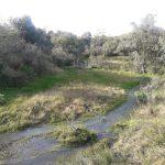 Venta campo de 10 hectáreas a 25 kms de San Carlos y a 14 kms de Valle Edén