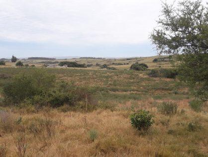 Venta campo 6.5 hectáreas a 23 kms del Faro y a 17 kms de Garzón