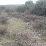 Venta campo 10 hectáreas en Maldonado a 13 kms de Garzón