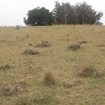 Venta campo 7 hectáreas en Maldonado a 16 kms de Garzón