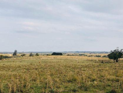 Venta campo de 8 hectáreas en Maldonado a 6 kms de Garzón