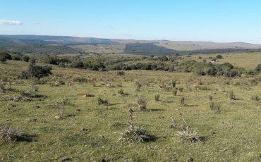 Venta campo 29 hectáreas en Maldonado, a 20 kilómetros de Pueblo Edén