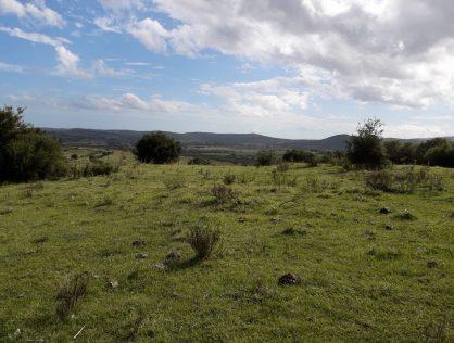 Campo 13 hectáreas a 2 kms de Ruta 12 Cerro 2 hermanos Maldonado