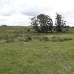 Venta campo 60 hectáreas sobre Ruta 39 Paraje Las Cañas