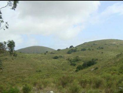 Venta Campo 95 hectáreas a 8 kms de Ruta 39 Maldonado
